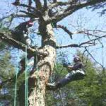 Twin Pines Recreational Tree Climbing, LLC